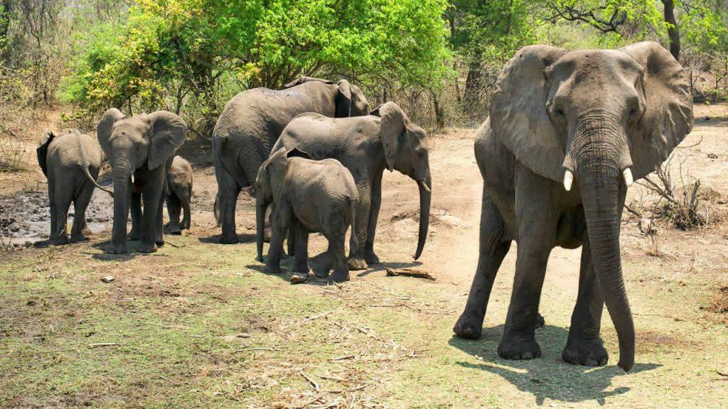 Safari a Malawi